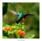 guadeloupe/colibri dans le jardin pour icone.jpg