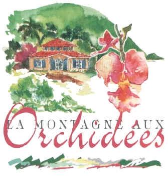 guadeloupe/la montagne aux orchidees.jpg