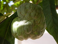 guadeloupe/pomme cannelle.png